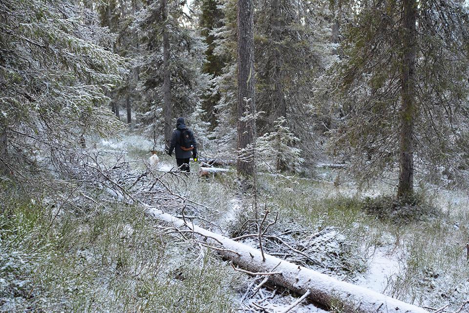 Kaatunut puu peittää polun.