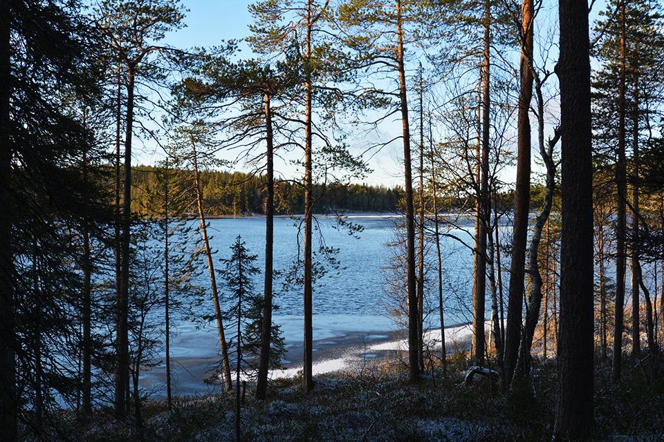 Konttaisjärvi marraskuisessa auringossa.