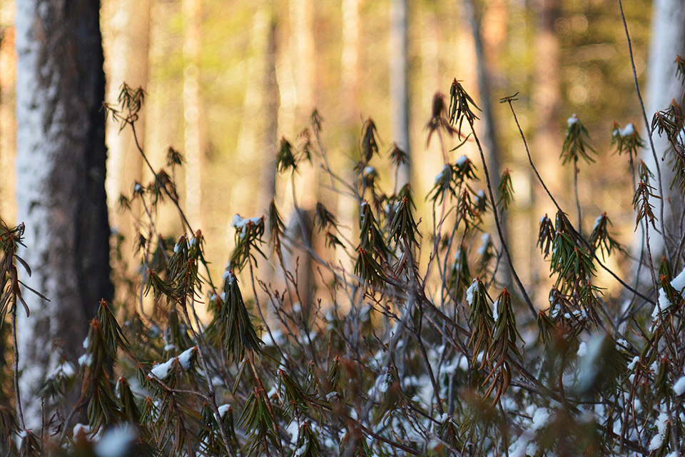 Rannan kasveja, taustalla auringonvaloa.
