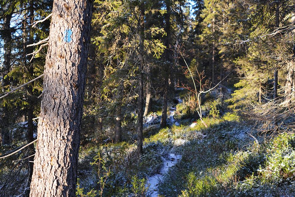 Aurinko paistaa sivusta kirkkaasti puun rungolle, jossa sininen maalimerkintä.