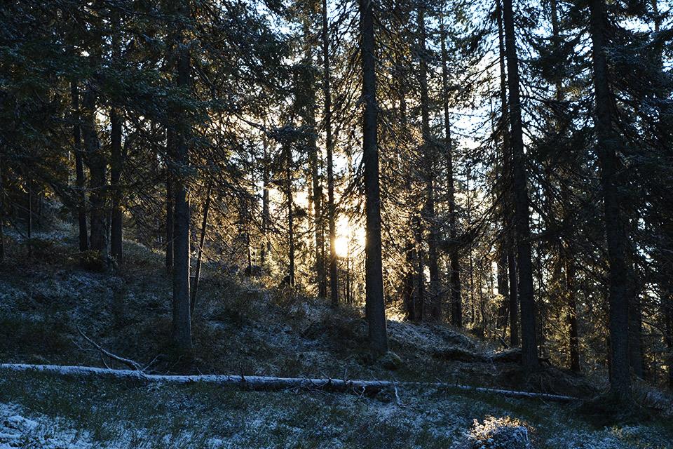 Aurinko paistaa puiden lomassa.