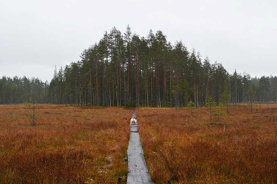 Värikäs ruska ja suo Tiilikkajärven kansallispuistossa.