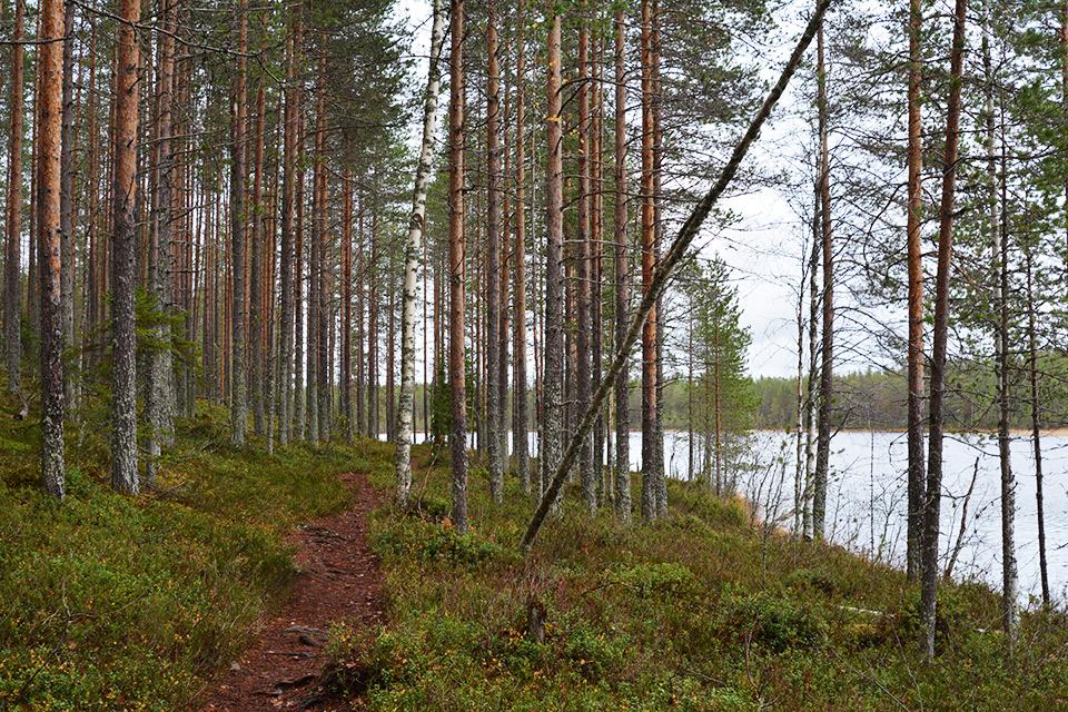 Uiton kierto Tiilikkajärven kansallispuistossa