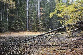 Kuopion Vanuvuoren luonnonsuojelualue