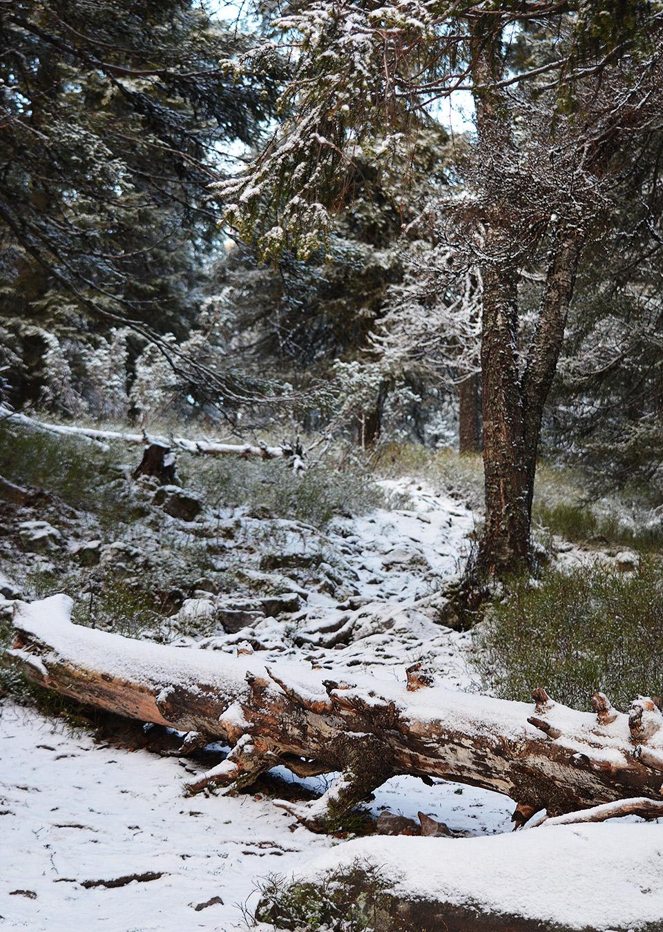 Suolammen laavun ympäristöä reunustavat puut ja yksi kaatunutkin honka