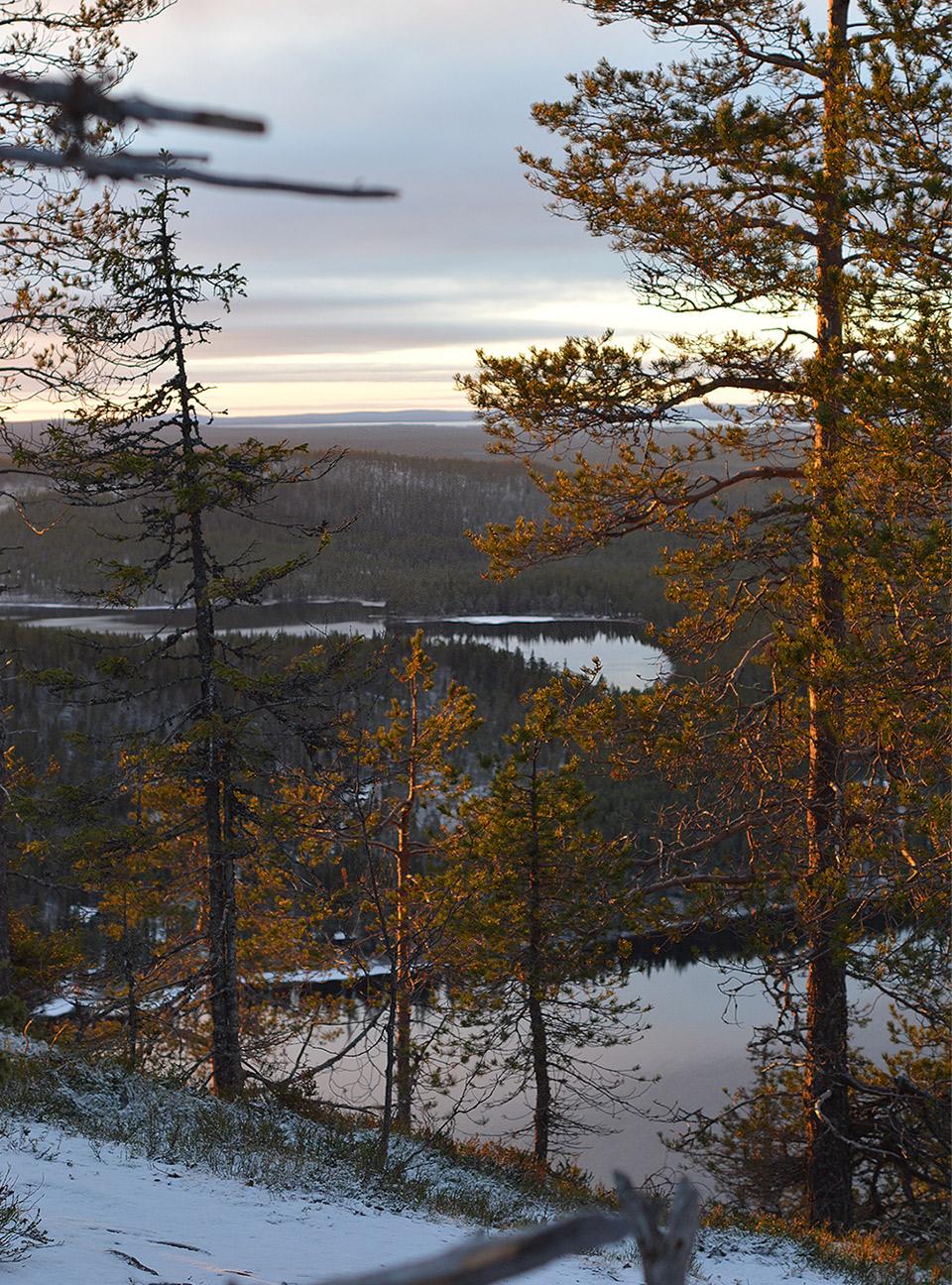 Puiden takana siintää järvimaisema