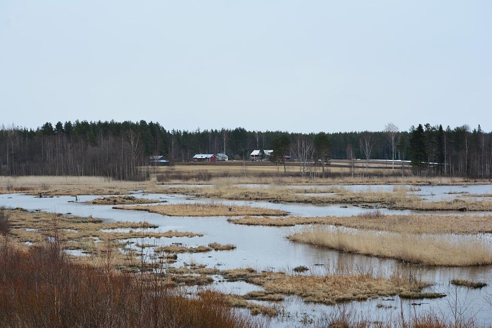 Maisema Keskimmäisen lintujärvelle huhtikuussa.