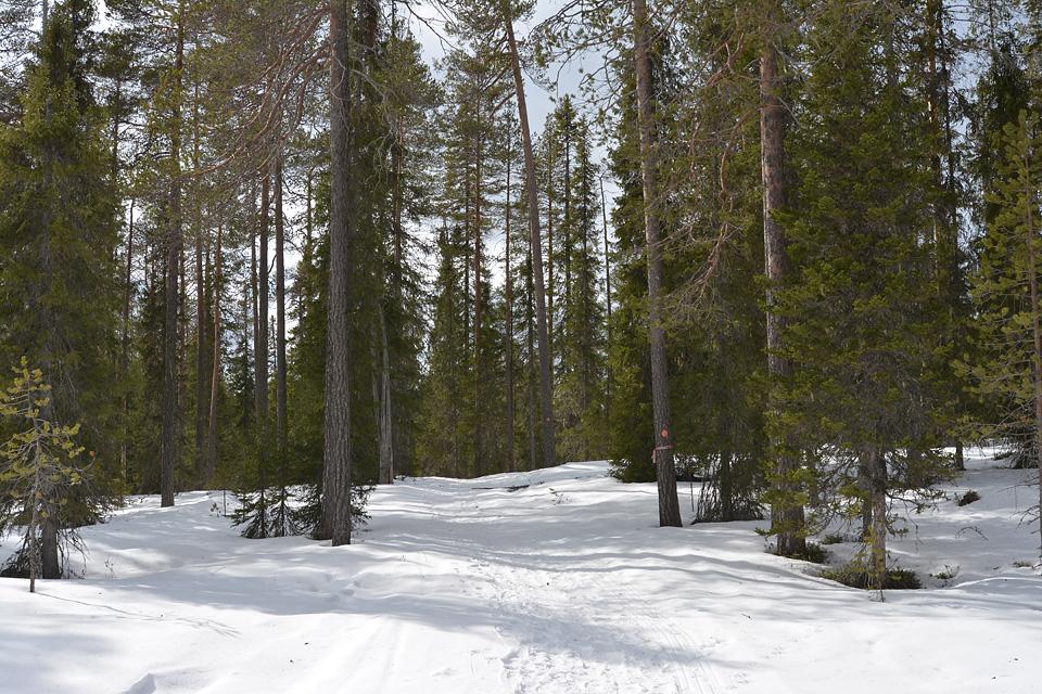 Talvireitti on suurimmalta osin leveää ja helppokulkuista maastoa.