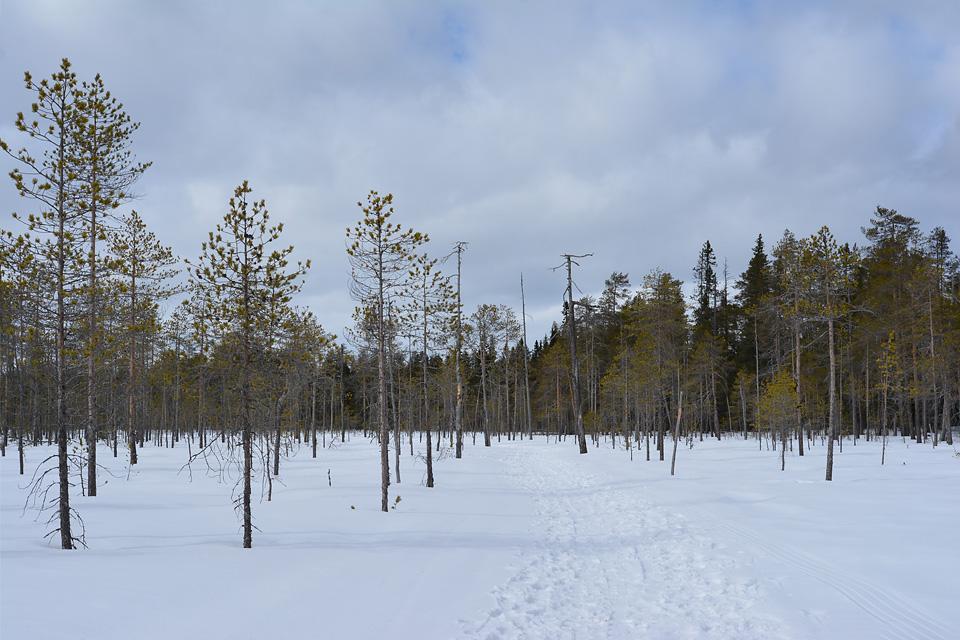 Maisemia reitin varrelta, tässä polku vie lumen peittämän suon halki.