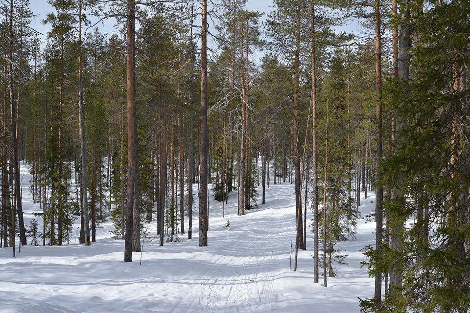 Leveä talvireitti lähtee kohti Värikalliota ja Julma-Ölkkyä.