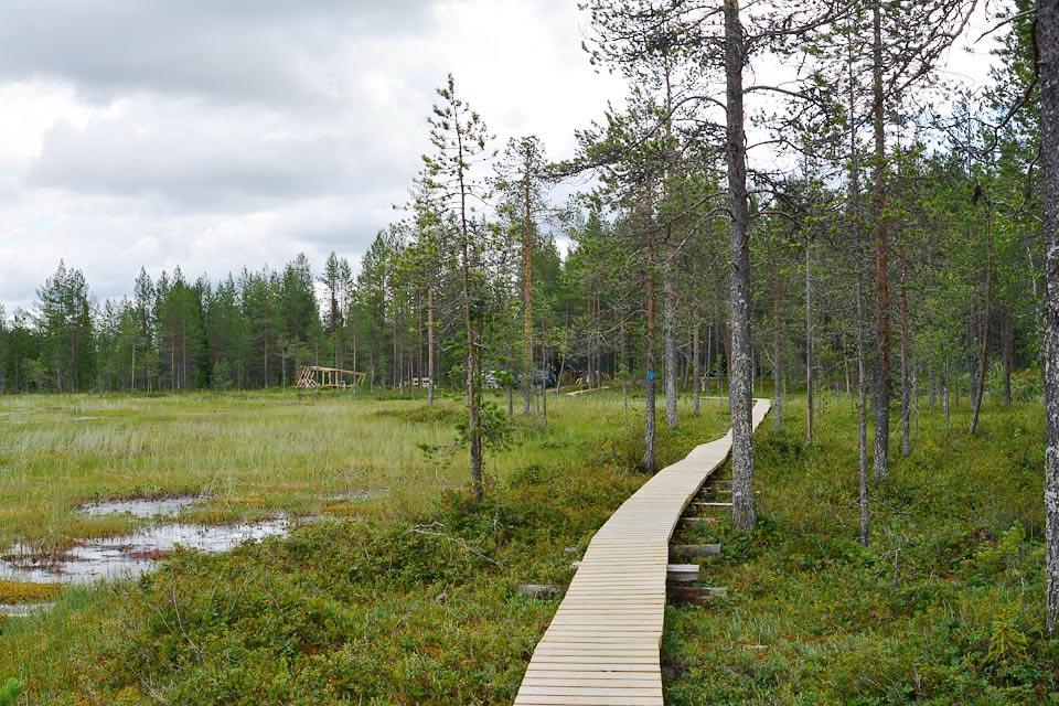 Pitkospuut Sotkan Ämmin kierroksella. Taustalla tekeillä oleva Sallan luonnonilmiöiden tarkkailupaikka.