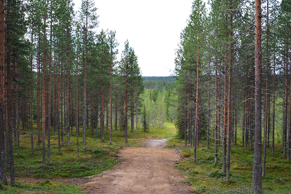 Ämmin kierros etenee metsään.