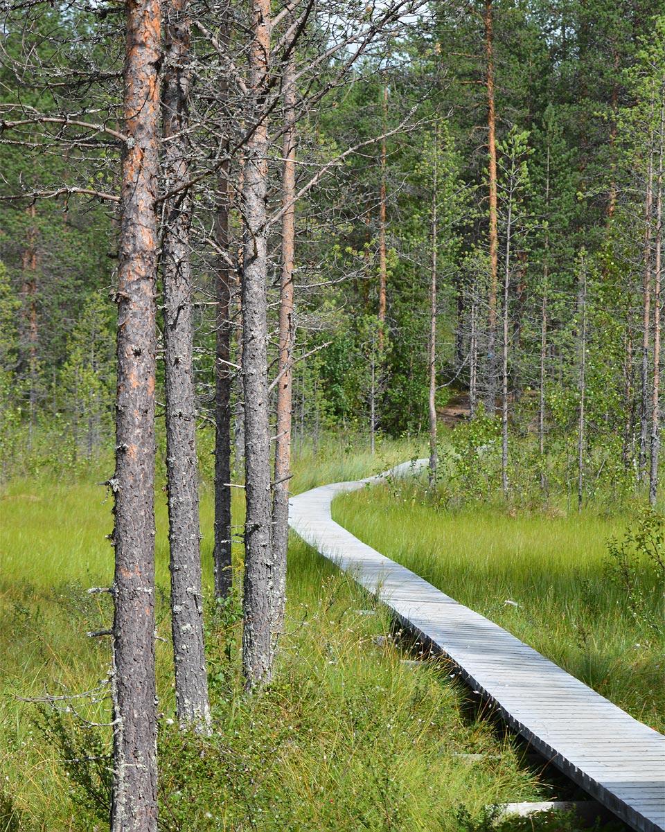 Pitkospuut suolla Ämminpolulla Sallassa.
