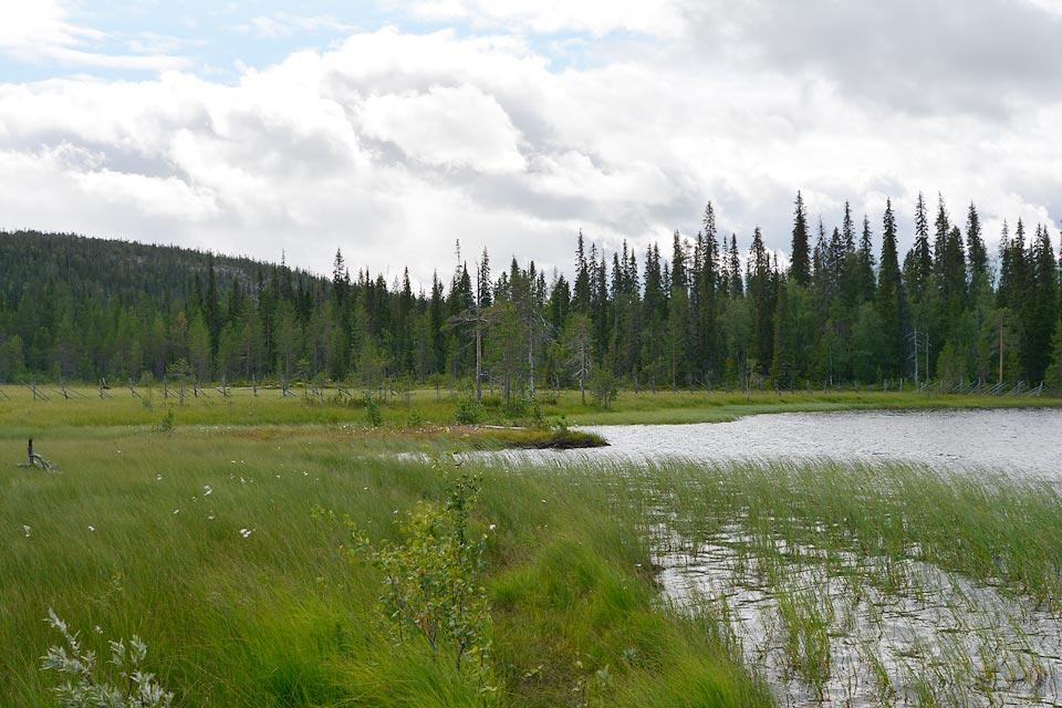 Hangasjärvi ja suota. Taustalla siintää vuori- tai tunturimaisema.