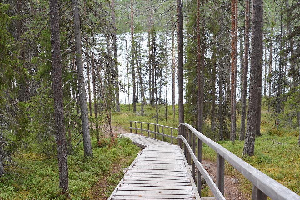 Portaat alas kohti Hangasjärven rantaa ja laavua Sallassa.
