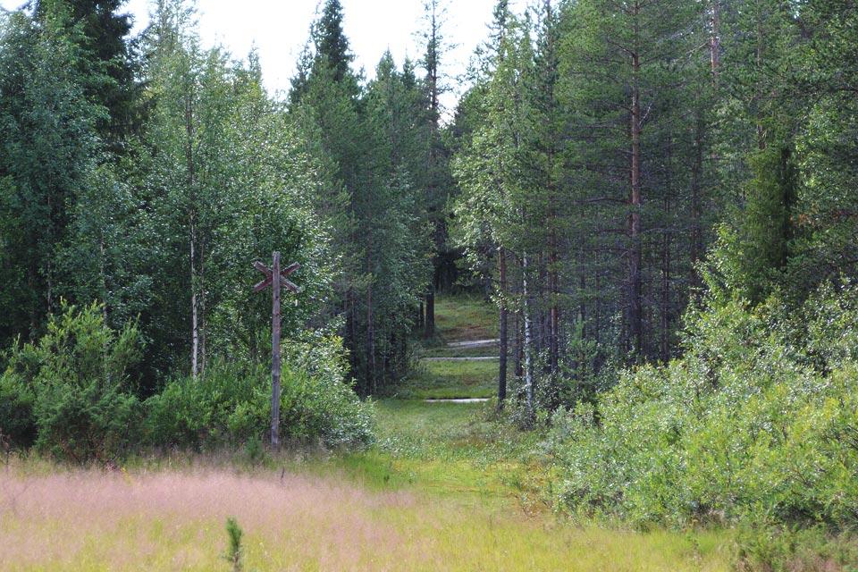 Maisemia Kaunisharjun kierroksella Sallatuntureilla. Polkuja ja kelkkareittejä risteilee puiden välissä.